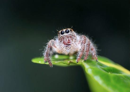 Spider helfen der Suchmaschinen zu ermitteln, für welche Keywords eine Seite relevant ist.